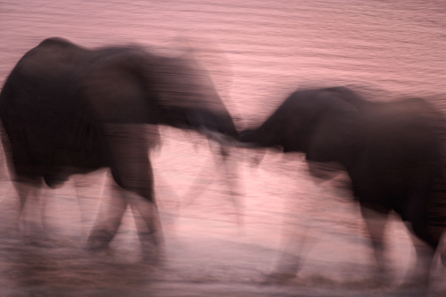 Gero Heine Photography - Fine Art Wildlife Nature Landscape Color Black&White Sepia Photography from Africa, India, California and the Western U.S.