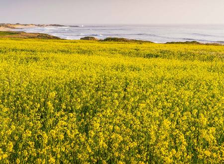 """Springtime Bliss (Flower Field By The Ocean)""     Central California"