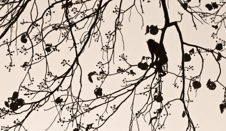 """Macaque Silhouette""     Bandhavgarh National Park, India"