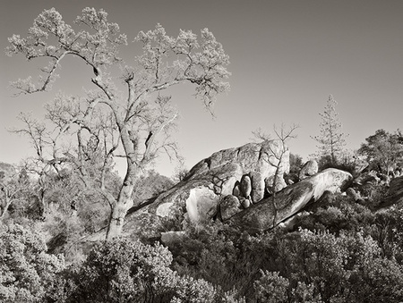 """Ventana Wilderness Landscape (Sepia)""     Big Sur Backcountry, California"