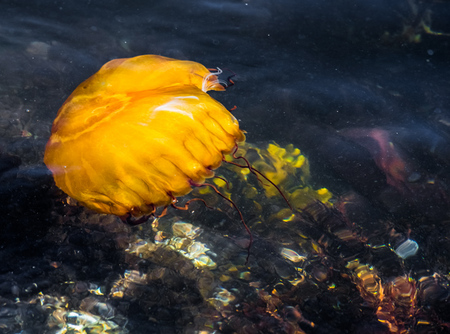 """Jellyfish I""     Point Lobos State Reserve, California"