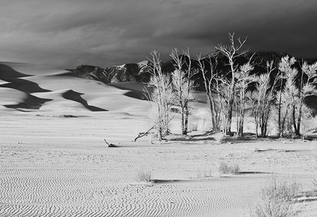 """Cottonwoods, Dunes & Clearing Storm I in B&W""     Great Sand Dunes National Park, Colorado"