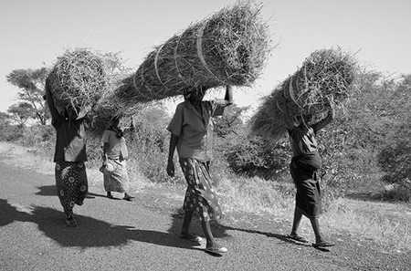 """Women Carrying Thatch Building Material""     Mfuwe, Zambia"